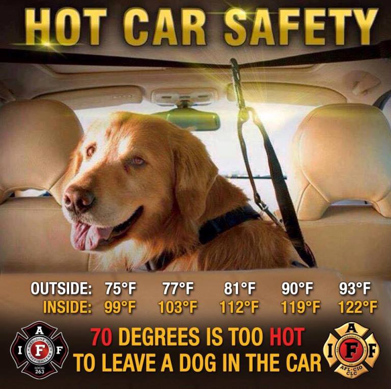 Summer Pet Safety Hot Car