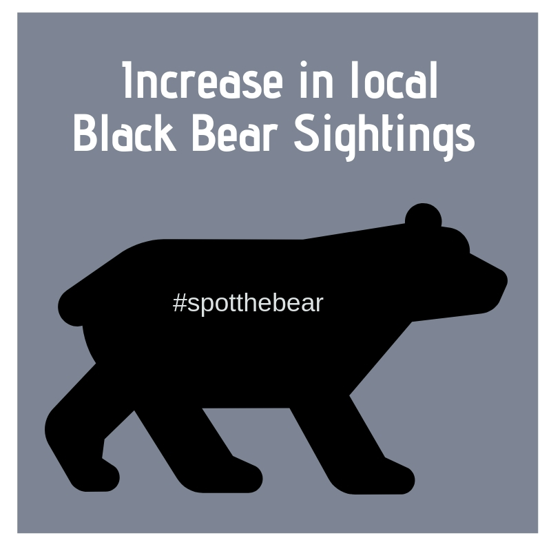 increase in local bear sightings